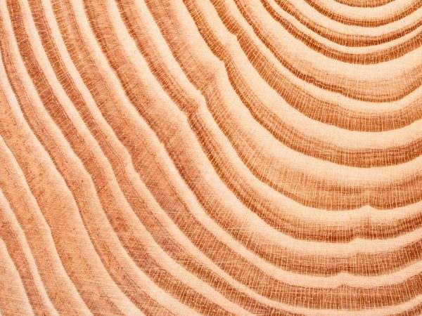 A close-up view of annual growth rings on a tree trunk