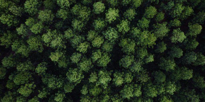 JCT-0921-AM_PB-710767-Sarah-Kapnick-Deforestation-paper-2880x1620