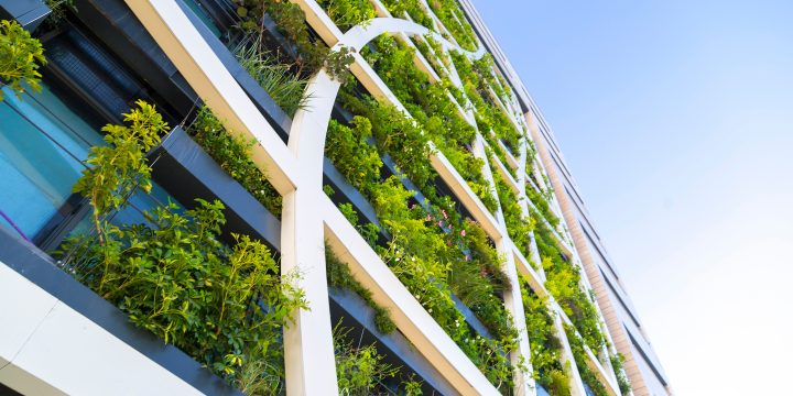 Detail from a living wall covered with variety of plants, flowers and grass, eco-friendly urban architecture in Tel Aviv, Israel